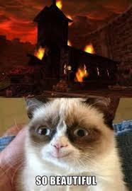 grumpy cat so beautiful. Modren Beautiful Something Made Angry Cat Smile DWL Inside Grumpy Cat So Beautiful