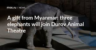 A gift from Myanmar: three <b>elephants</b> will join Durov <b>Animal</b> Theatre ...