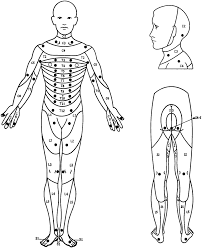 Spinal Dermatomes Chart Location Of The Key Sensory Points For Each Dermatome