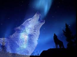 wolf howling at the moon wallpaper hd. Unique Wallpaper Free Howling Wolf Wallpapers Picture  Long Throughout At The Moon Wallpaper Hd H