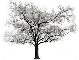 why do trees lose leaves in winter