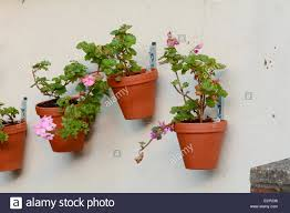 sumptuous design wall hanging flower pots with cozy mounted pot holder uk vertical garden planters fabulous wall flower planters
