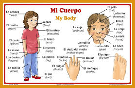 Spanish Language School Poster Parts Of The Body Wall Chart For Home And Classroom Spanish And English Bilingual Text