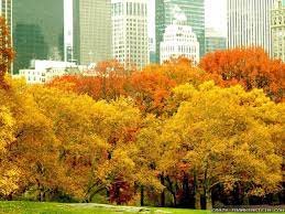 Autumn in NYC Wallpaper on WallpaperSafari
