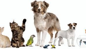 Publican Ley de Protección de Animales para Sonora