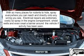 amazon com vehicle protection by exterminators choice mice vehicle wiring damage amazon com vehicle protection by exterminators choice mice & rodent repellent vehicle wiring protects engine wiring prevents nesting chewing all