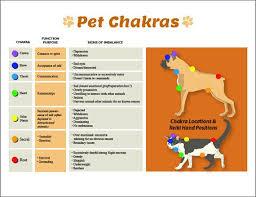 Animal Chakra Chart Dog Cat 7 Chakras Printable Chart Poster Pet Reiki Hand