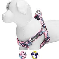 Blueberry Pet Soft Comfy Welcoming Rose Flower Prints