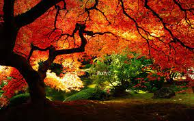 Fall Leaves Wallpaper HD on WallpaperSafari