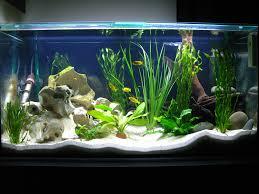 bow front aquarium set up