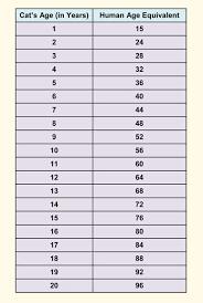 63 Interpretive Cat Years Versus Dog Years