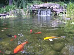 Small Picture backyard 19 Wonderful Design Fishpond Ea For Inspire