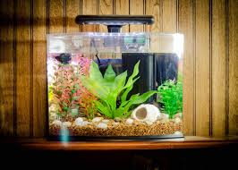 16awesome fish tank decoration themes