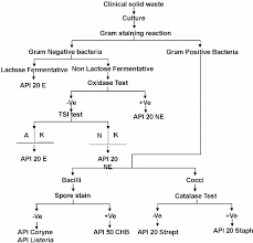 Microbiology Unknown Test Flow Chart Flow Chart For The Identification Of Bacteria In Clinical