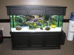 office aquariums. with plenty of fish tanks for sale on junk mail you can choose a tank that is suited to the size your room another option build own office aquariums s