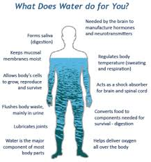 The Water In You Water And The Human Body