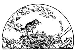 Small Picture Coloring page birds nest img 19453