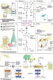 Реферат Процессы брожения Санитарный надзор Виды дезинфекции  Санитарный надзор Виды дезинфекции