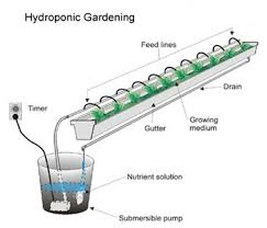 how to build a hydroponic garden. a simple drip hydroponic setup using rain gutter. the gutter is usually filled with growing medium like expanded clay pebbles or rock wool. how to build garden