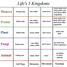 Kingdoms Of Biology Chart 23 Thorough Plant Kingdom Classification Chart For Kids