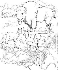 Nice Zoo Coloring Page Gallery Coloring Pages #5291 - Unknown ...