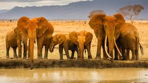 2019 Elephant HD Image free download