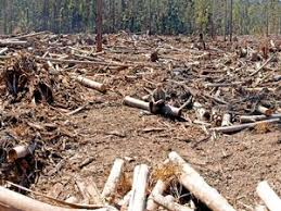Latest Logging Articles Topics Coffs Coast Advocate