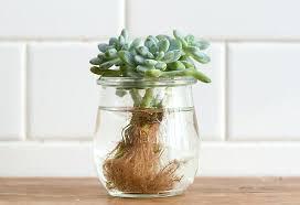 mini succulents water garden indoor diy tabletop