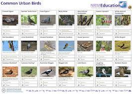Common Urban Birds Identification Chart Manualzz Com