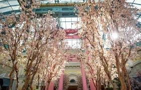 the bellagio showcases its spring display at the bellagio conservatory botanical gardens in las vegas