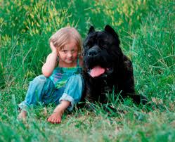 cane corso breeder cane corso puppies