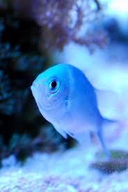Cool Aquariums 61 Best Cool Fish Aquariums I Want Images On Pinterest