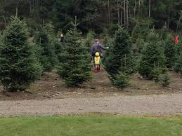 Best Tree Farm to Bring the Whole (Furry) Family