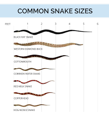 Snake Identification Anatomy Life Cycle Types Of Snakes