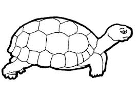 Small Picture Clipart coloring pages of turtle
