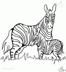 Small Picture Impressive Zebra Coloring Page Best Coloring P 2958 Unknown