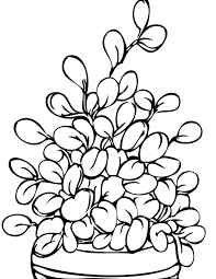 Beautifull Plant Coloring Pages For Free Colinbookman