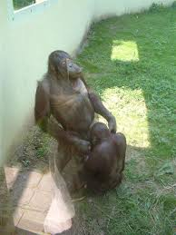 Apes having sex with women