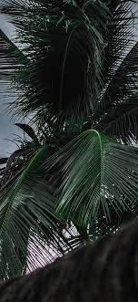 Best Iphone X Wallpaper Palm tree ...