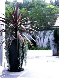 plants for tall planters large patio pots and lovely of best outdoor ideas ceramic uk