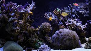 Aquarium Desktop Wallpaper