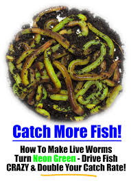 how to make live composting worms neon green drive fish crazy
