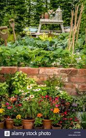 Plants For Kitchen Garden Strawberry And Cabbage Plants Growing In Small Domestic Kitchen