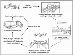 How To Farm Channel Catfish The Fish Site