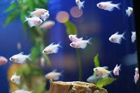 Fish Tank Maintenance Chart Aquarium Maintenance Tips And Fish Care Guidelines