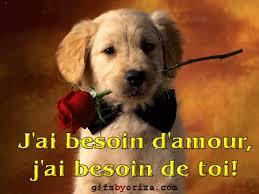 """Résultat de recherche d'images pour """"photo de rose d'amour"""""""
