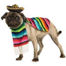 pug in taco costume. Delighful Taco Image Is Loading MexicanSarapePetCostumeSombreroDogPonchoMariachi For Pug In Taco Costume