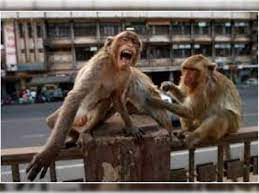 No Monkey Business: As China Reports First Monkey B Virus Death, Is the  World Staring at a New Pandemic?