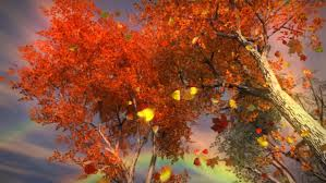 images of fall leaves and trees