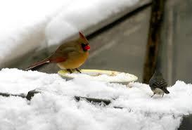 What Is Bird Watching With PicturesBackyard Bird Watch